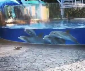 Delfiny poznają wiewiórki