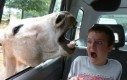 Dzieci kochają zwierzęta