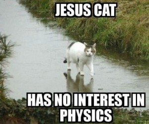 Kotek chodzący po wodzie