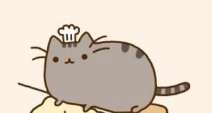 Kot i ugniatanie ciasta