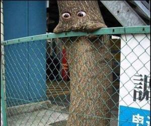Wszystkożerne drzewa