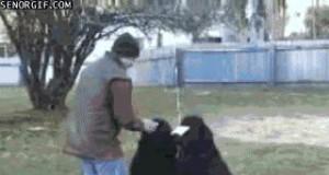 Nie każdego psa łatwo wytresować