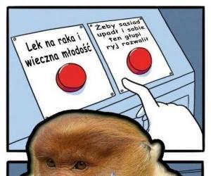 I tak wiemy, co wybierze