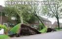 Kiedy wieje silny wiatr...