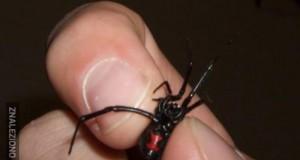 Idź mię z tym pająkiem!