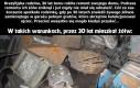 Żółw przeżył 30 lat w garażu pełnym śmieci