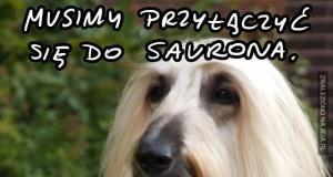 Saruman, Sarudog?