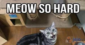 Koty to wcielone zło!