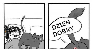 Właściciele kotów tak mają
