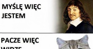 Kocie mądrości