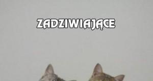 Zdziwione kotki