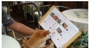Co dziś na obiad?