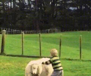 Jeźdźcy owiec