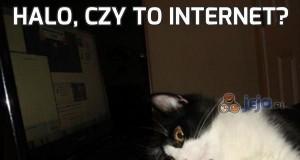 Halo, czy to internet?