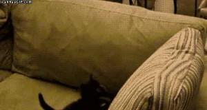 Pułapka na koteczka