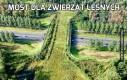 Most dla zwierząt leśnych