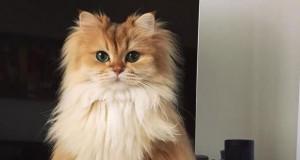 Najbardziej fotogeniczny kot