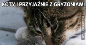 Koty i przyjaźnie z gryzoniami