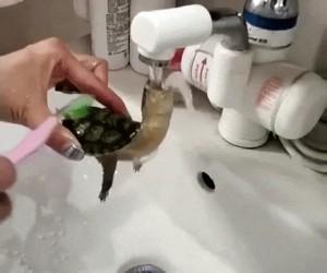 Poranna kąpiel