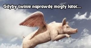Latające świnie
