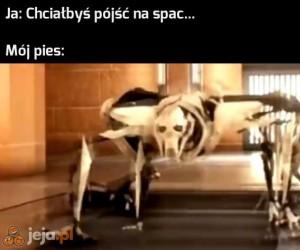 Ale kiedy coś broi, to nagle nie rozumie po polsku