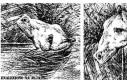 Iluzja - Rysowane zwierzęta