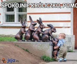 Spokojnie króliczku, pomogę ci...