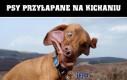 Psy przyłapane na kichaniu