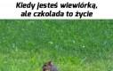 Baton dla wiewiórki