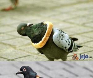 Gołębie, wszędzie gołębie