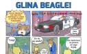 Glina Beagle na miejscu zbrodni