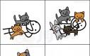 Nie ufaj kotom
