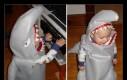Rekiny nie są straszne