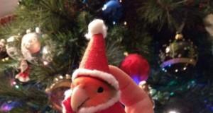 Świąteczna papuga