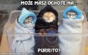 Które purrito wybierasz?