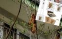 Lagun zarabia na schronisko dla zwierząt :)