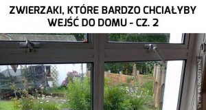 Zwierzaki, które bardzo chciałyby wejść do domu - cz. 2