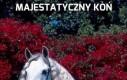 Majestatyczny koń