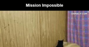 Koteł ninja!