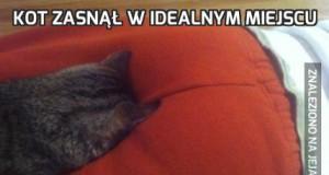 Kot zasnął w idealnym miejscu