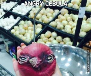 Angry Cebula