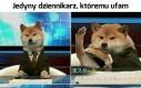 Tomasz Pies na żywo