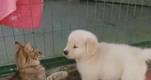 Miłość od pierwszego wejrzenia