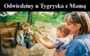 Odwiedziny u Tygryska