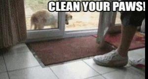 Łapki trzeba czyścić