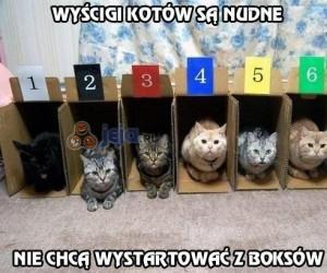 Wyścigi kotów są nudne