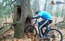 Tunel w drzewie