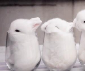 Króliki w szklankach