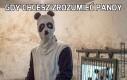 Gdy chcesz zrozumieć pandy
