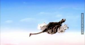 Gdyby strusie latały